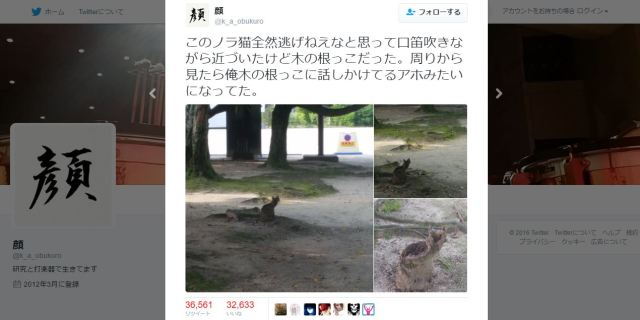 "Japanese Twitter's definitive collection of ""Wait, that's not a cat!"" moments【Photos】"
