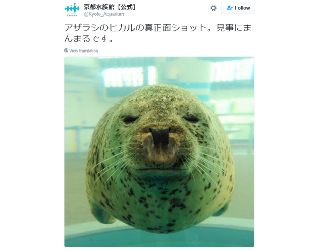 Kyoto Aquarium teaches us something we never knew about seals: They're almost perfect circles!