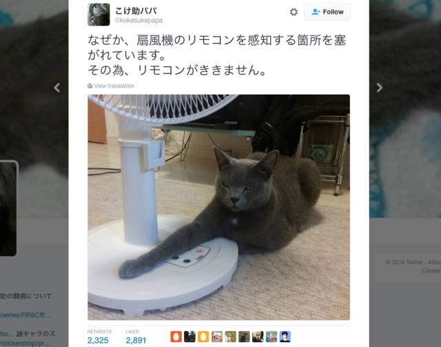 Japanese cat owns all the things and he won't be letting you near his fan this summer