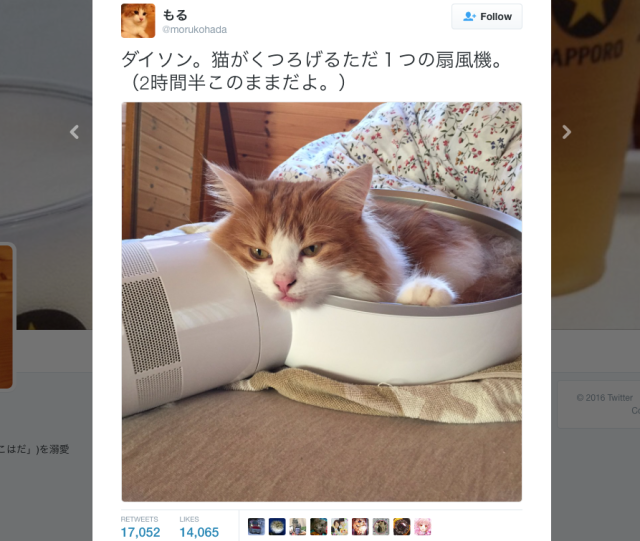 Cute cat stays cool in Japanese heat by snuggling up inside Dyson fan