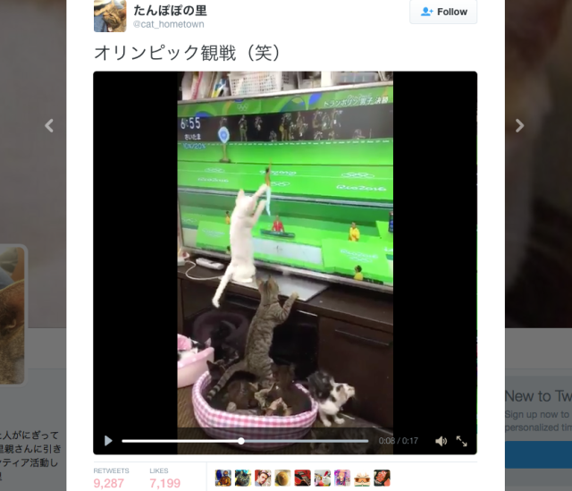 Cute cats from Japan show their love for competitors at the Olympic games