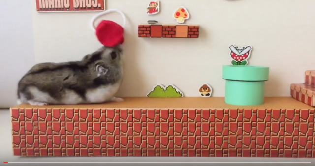 Hamster clears Mario level, earns maximum points for cuteness