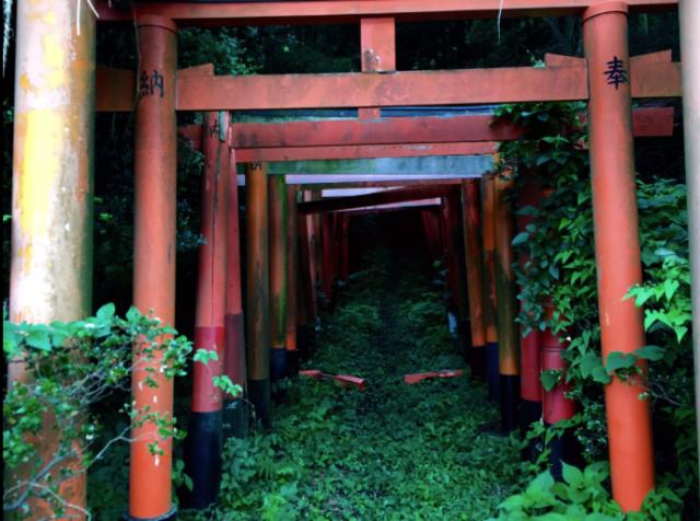 Japanese artist stumbles upon stunning scenic site at hidden shrine outside of Tokyo