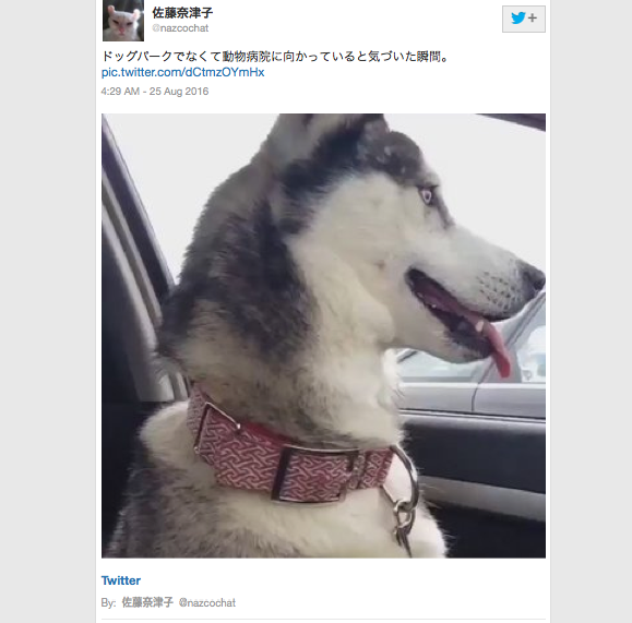 Video shows instant dog learns he's actually going to the vet, not dog park