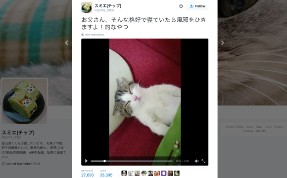 Cute cat sleeps like a human, doesn't even stir when his owner tucks him in