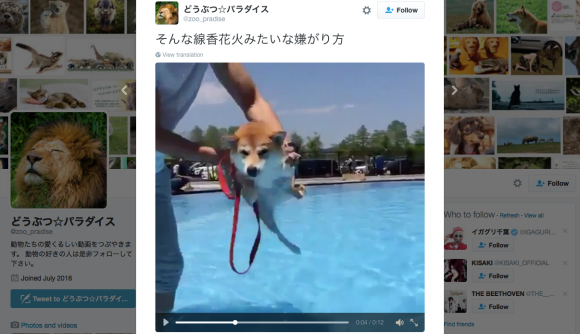 "Video of ""air swimming"" dog proves to be a hit with Japanese Twitter users【Video】"