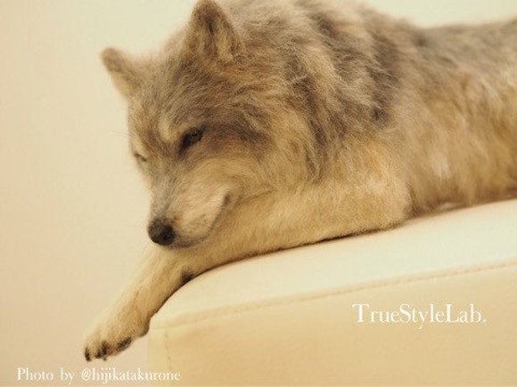Handsome wolf takes Internet by storm – but he's entirely handmade from wool felt
