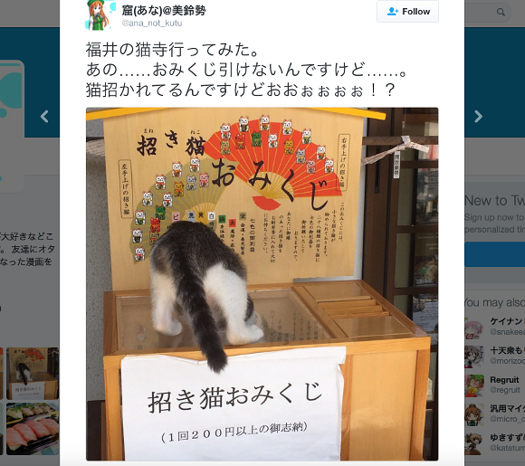 Beckoning cat fortunes lure a kitten into their box at cat temple in Japan