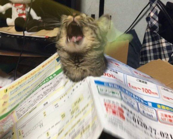 cat-newspaper-1