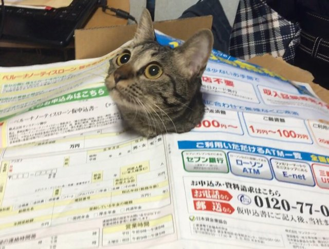 """""""Oh hello there, human!"""" Cute cat peeking through paper turns hilariously cat-astrophic 【Pics】"""