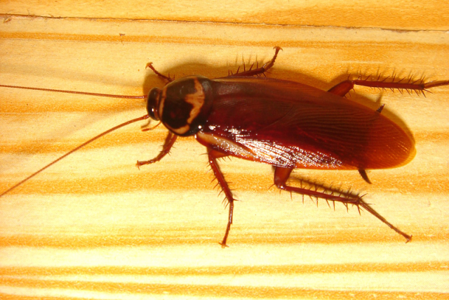 Japanese woman shows quick-thinking, marginal courage in clever cockroach-fighting plan【Photos】