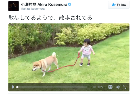Toddler goes for an adorable dog walk but the question is: who's walking who?