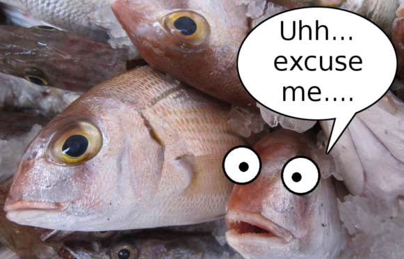 "How you know your fish is too fresh: when it comes with a warning ""may come back to life"" 【Pics】"