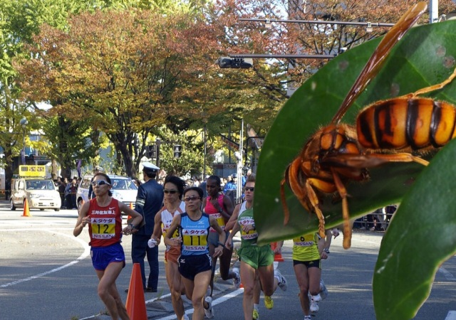 Japanese marathoners attacked by swarm of hornets, 115 stung