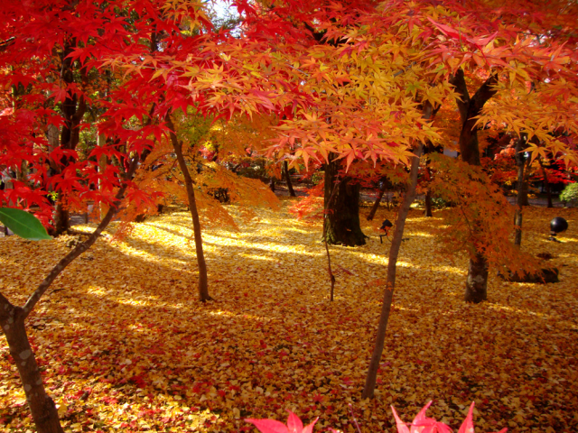 The 10 most beautiful places to see the autumn leaves in Japan, as chosen by travelers