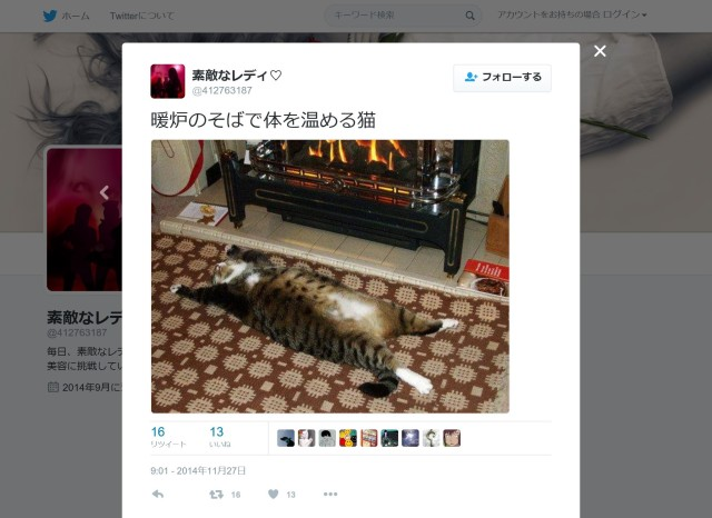 【Monday Kickstart】Adorable Japanese cats sleep in strange places: a retrospective