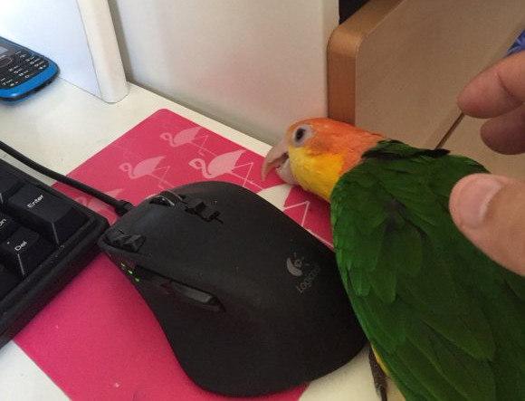 Parrots amuse owners in Japan by mimicking household items to get some attention