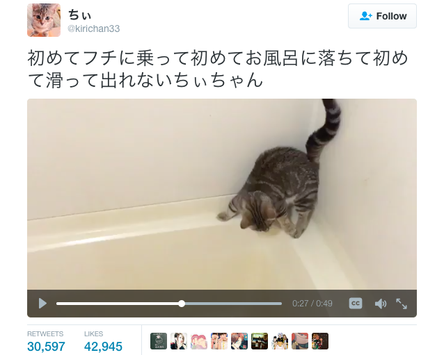 Cute cat discovers bathtub for first time, eventually learns how to jump out after falling in