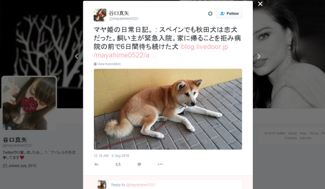 Hachiko's spirit lives on in Spain: loyal Japanese Akita dog waits outside hospital for owner