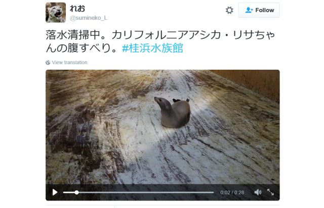 Sliding sea lion serenely soothes spectators at Japanese aquarium【Video】