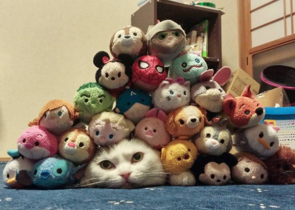 Cute cat is the star Tsum Tsum character in this Japanese home!