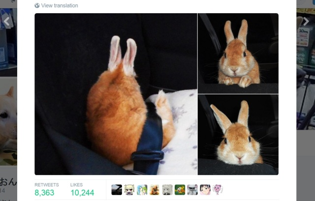 All the cutest, fluffy bunnies of Twitter are here to bring some cheer to your week
