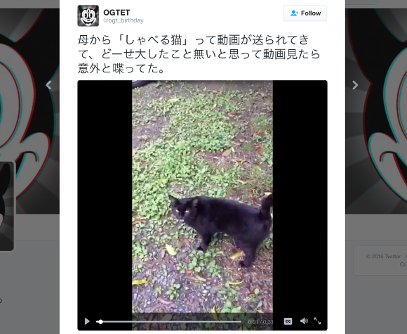 """Black cat displays magical abilities by """"talking"""" to human in Japanese"""