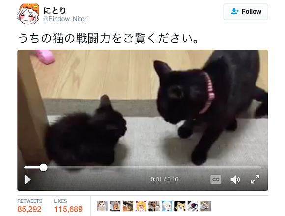 "Cute cat's amazing ""combat power"" melts hearts online"