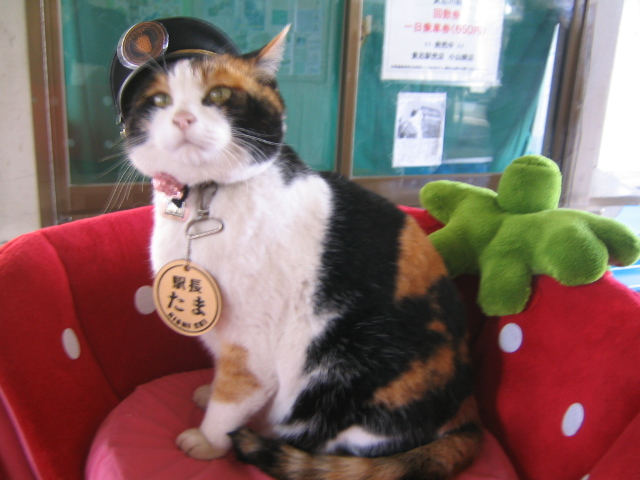 Making trains meow-r fun: Japanese station master cats (and bunny!) strut their fluff【Pics】