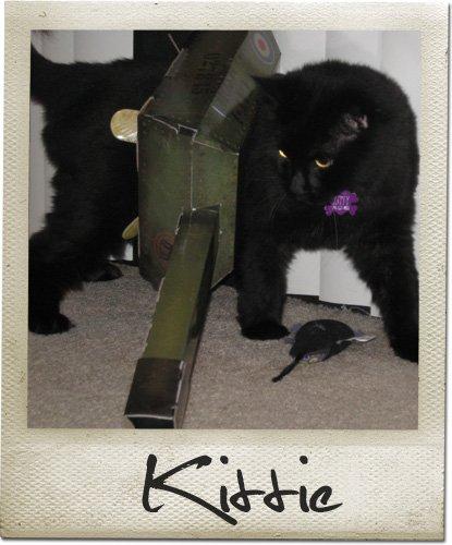cat-tank-2