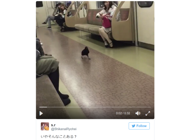 Japan's public transportation system is so awesome even birds apparently want to use it 【Video】