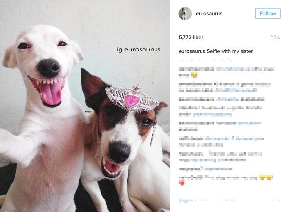 Smiley Jack Russell from Thailand is one of the cutest dogs on Instagram!