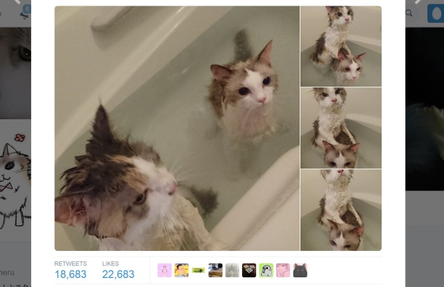 It's just another night of bath time fun for these two water-loving kitties