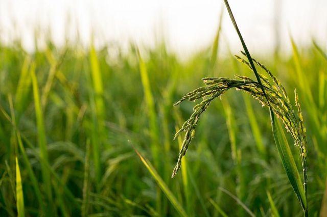 Japan's 'agri-tech' farming revolution