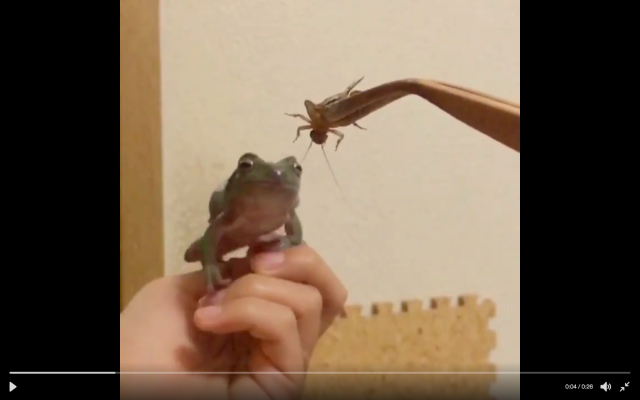 Hilarious frog fail sees insect escape certain death