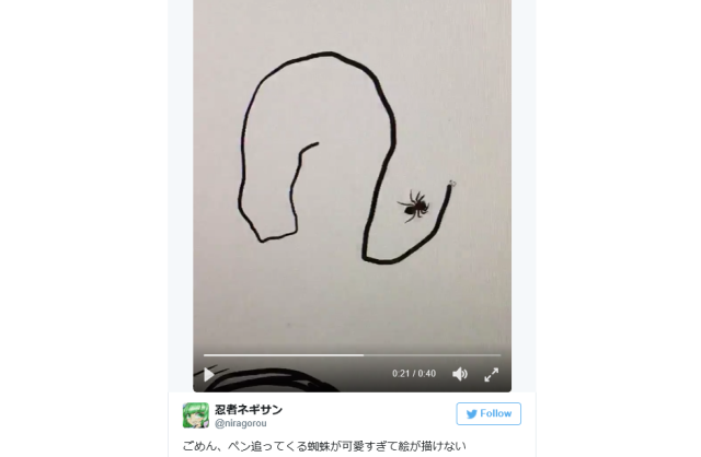 Everything is cuter in Japan…even the spider videos?!? 【Video】