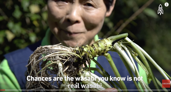 The wasabi you eat probably isn't wasabi, according to new video from Japan