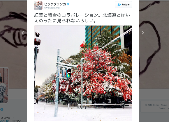 Heavy snowfall comes early to Japan, creates beautiful images of snow-covered autumn leaves【Pics】
