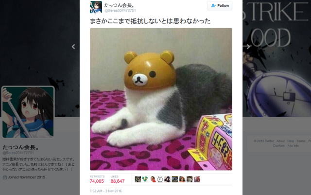 Most patient cat ever accepts Japanese bear headwear for perfect photo