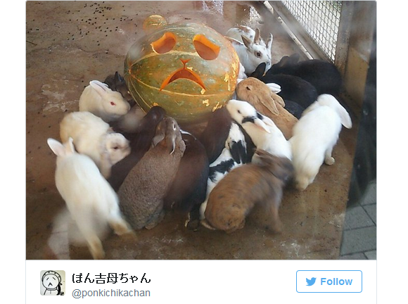 The fate of jack-o-lanterns in Japan: to be adorably devoured by a writhing mass of bunnies