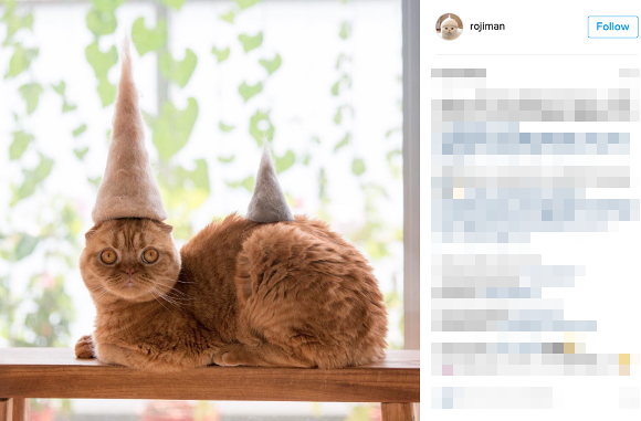 Japanese pet owner photographs cats in hats made from the cats' own hair 【Pics】