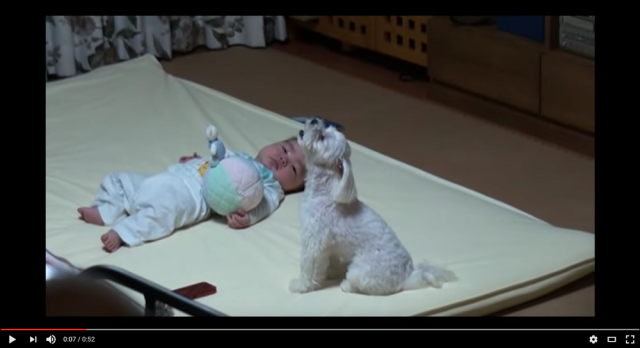 Darling dog can't stand to let a poor baby cry alone【Video】