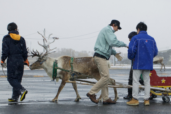 dominos-reindeer-2