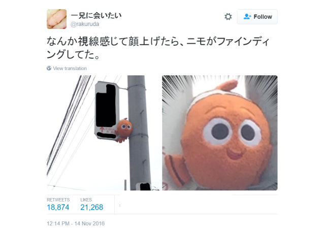 Someone found Pixar's Nemo in real life, and he's trapped in Japan!
