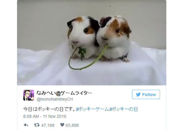 """Two guinea pigs accidentally find love sharing a snack on November 11th """"Pocky Day"""" 【Video】"""