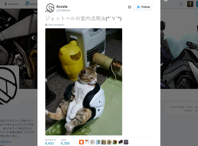 Cat finds perfect seat that is equal parts comfortable and badass