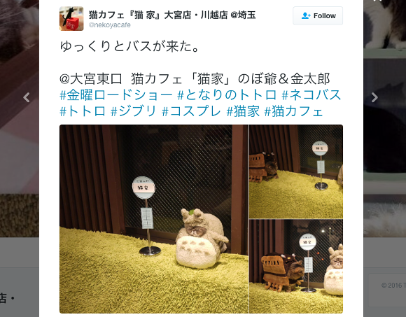 Japanese cat cafe delights people around the world with adorable kitty cosplay