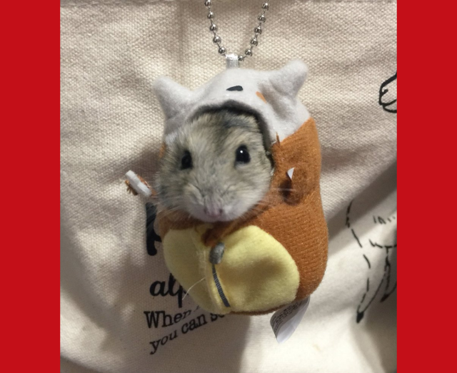 Japanese hamster's adorable Pokémon cosplay charms the Internet  【Photos】