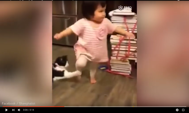 Sinister cat trips up toddler walking past【Video】