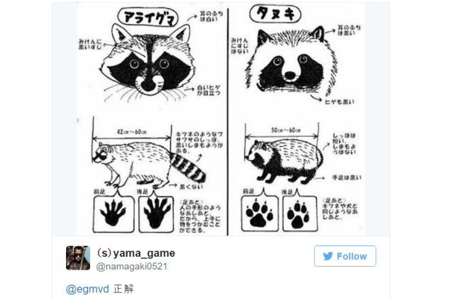 How to tell a Japanese tanuki apart from a regular raccoon